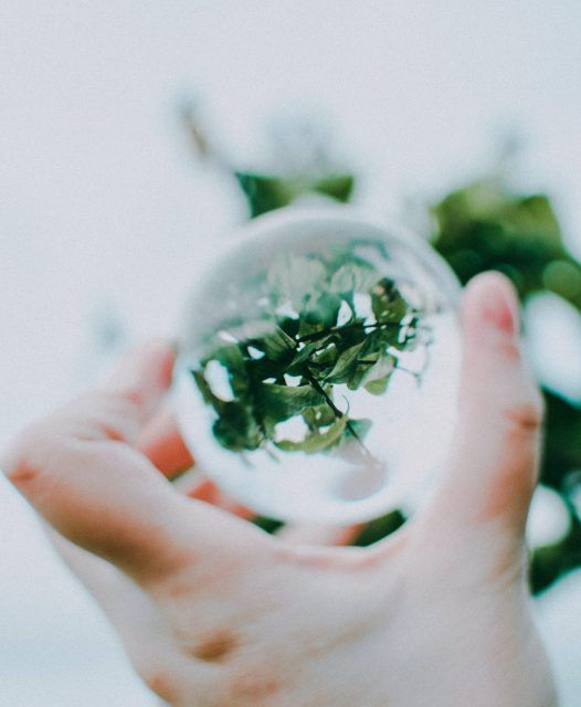 shallow-focus-photo-of-green-plants-3020839